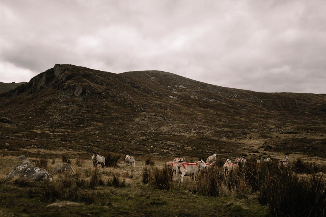 018 northern ireland wedding photographer mourne mountains elopement